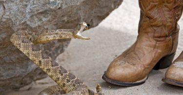 Do Snake Boots Really Work