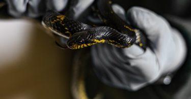 Best Snake Bite Proof Gloves
