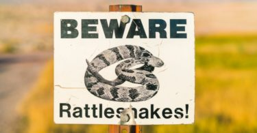 How to Avoid Rattlesnakes While Hiking